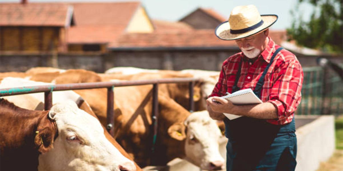 Ventilação industrial: quais as principais vantagens na pecuária?